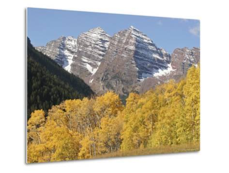 The Majestic Maroon Bells are Framed by Aspen and Evergreen Trees-Charles Kogod-Metal Print