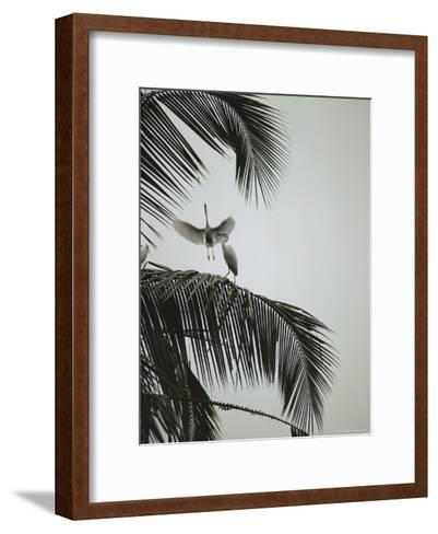 Egrets in a Palm Tree, Bali, Indonesia-Michael Nichols-Framed Art Print