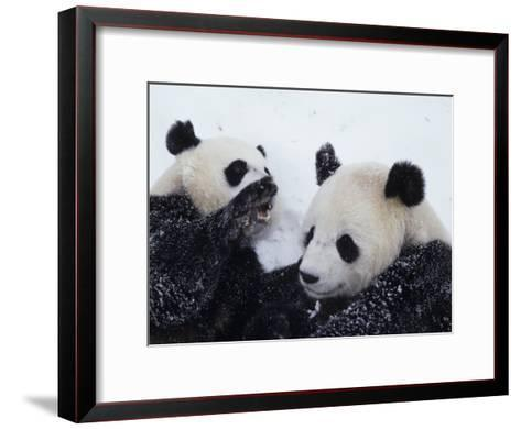 Pandas at the National Zoo in Washington, DC-Taylor S^ Kennedy-Framed Art Print