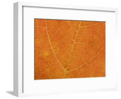 A Close View of the Veins and Cells of a Leaf in Autumn Color, Washington, District of Columbia-Taylor S^ Kennedy-Framed Art Print