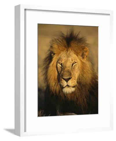 A Portrait of a Male African Lion Sitting in the Sun--Framed Art Print