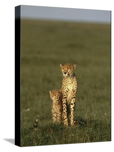 A Portrait of a Female Cheetah and Her Cub-Norbert Rosing-Stretched Canvas Print