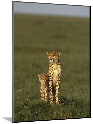 A Portrait of a Female Cheetah and Her Cub-Norbert Rosing-Mounted Photographic Print