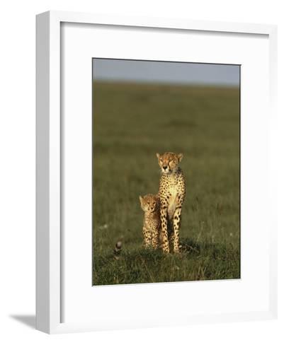 A Portrait of a Female Cheetah and Her Cub-Norbert Rosing-Framed Art Print