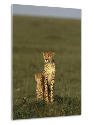 A Portrait of a Female Cheetah and Her Cub-Norbert Rosing-Metal Print
