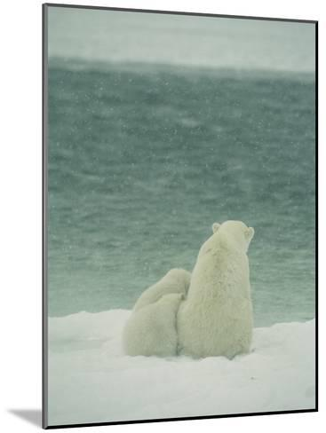 A Polar Bear and Her Cubs Sit Near Waters Edge-Norbert Rosing-Mounted Photographic Print