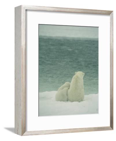 A Polar Bear and Her Cubs Sit Near Waters Edge-Norbert Rosing-Framed Art Print