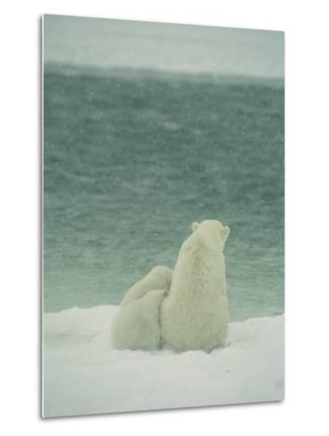 A Polar Bear and Her Cubs Sit Near Waters Edge-Norbert Rosing-Metal Print