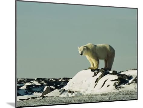 A Polar Bear Stands Atop a Snow-Covered Rock-Norbert Rosing-Mounted Photographic Print