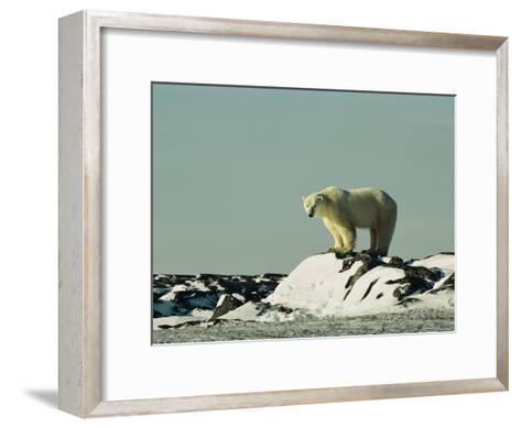 A Polar Bear Stands Atop a Snow-Covered Rock-Norbert Rosing-Framed Art Print