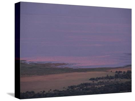 Thousands of Flamingoes Give a Pink Cast to Tanzanias Lake Manyara-Kenneth Garrett-Stretched Canvas Print