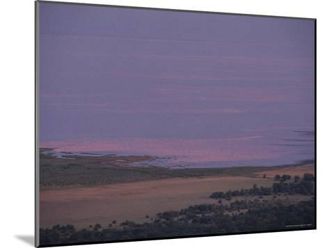 Thousands of Flamingoes Give a Pink Cast to Tanzanias Lake Manyara-Kenneth Garrett-Mounted Photographic Print