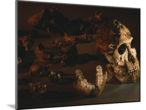 A Two-Million-Year-Old Fossil of Australopithecus Robustus-Kenneth Garrett-Mounted Photographic Print