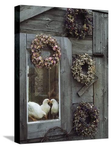 Dried Flower Wreaths Adorn a Wooden Wall Near a Window with Doves-Bill Curtsinger-Stretched Canvas Print