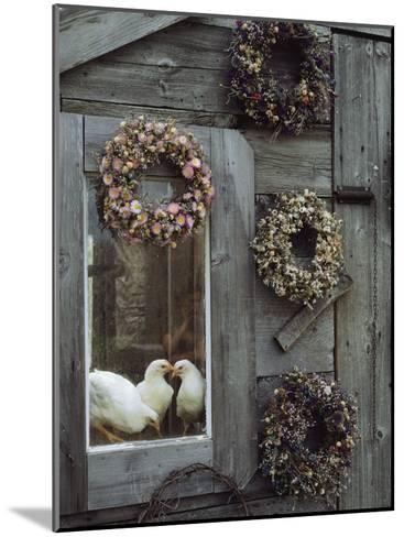 Dried Flower Wreaths Adorn a Wooden Wall Near a Window with Doves-Bill Curtsinger-Mounted Photographic Print
