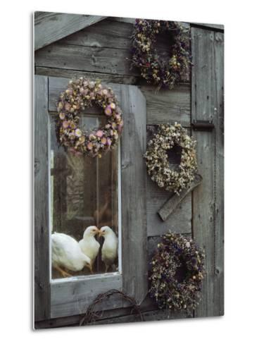 Dried Flower Wreaths Adorn a Wooden Wall Near a Window with Doves-Bill Curtsinger-Metal Print