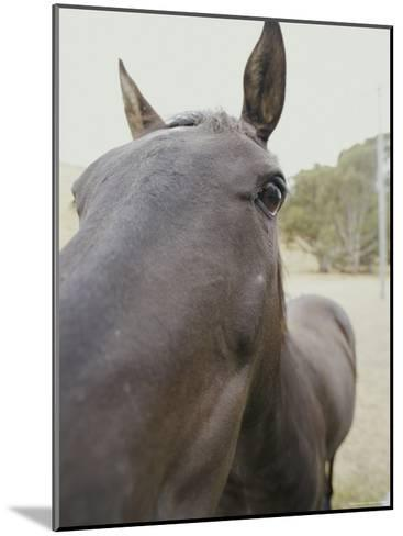 Close View of a Horses Face-Jason Edwards-Mounted Photographic Print