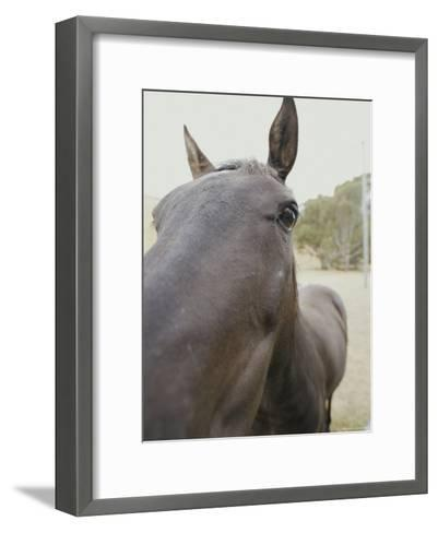 Close View of a Horses Face-Jason Edwards-Framed Art Print