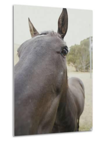 Close View of a Horses Face-Jason Edwards-Metal Print