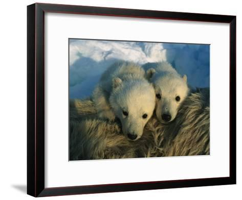 A Pair of Young Polar Bear Cubs-Norbert Rosing-Framed Art Print
