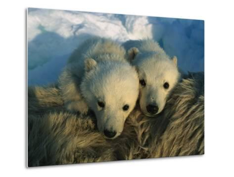 A Pair of Young Polar Bear Cubs-Norbert Rosing-Metal Print