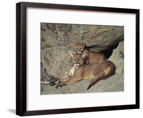 A Mother Mountain Lion and Her Cub Rest at the Entrance to a Cave-Norbert Rosing-Framed Art Print
