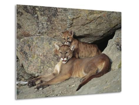 A Mother Mountain Lion and Her Cub Rest at the Entrance to a Cave-Norbert Rosing-Metal Print
