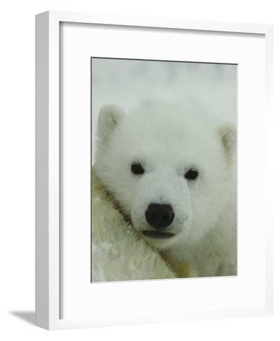 A Portrait of a Polar Bear Cub-Norbert Rosing-Framed Art Print