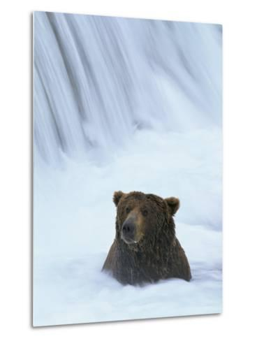 Brown Bear Sits in Froth of Waterfall During Salmon Spawning-Michael Melford-Metal Print