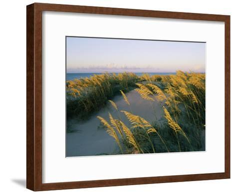 Sea Oats, Dunes, and Beach at Oregon Inlet-Skip Brown-Framed Art Print
