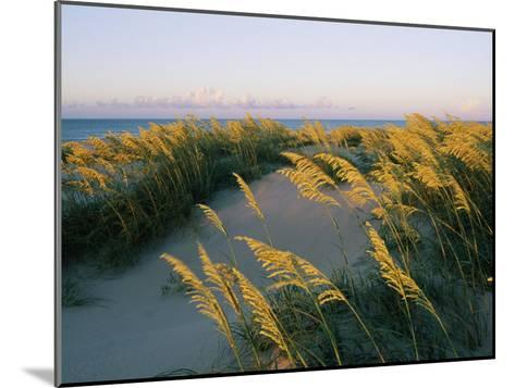 Sea Oats, Dunes, and Beach at Oregon Inlet-Skip Brown-Mounted Photographic Print
