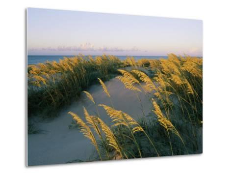 Sea Oats, Dunes, and Beach at Oregon Inlet-Skip Brown-Metal Print