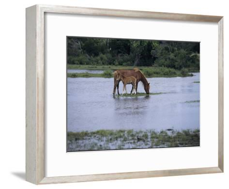 A Grazing Chincoteague Pony with Her Foal-Medford Taylor-Framed Art Print