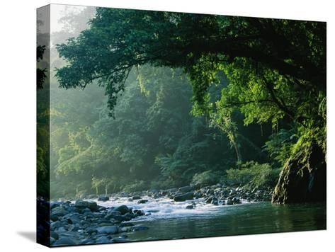 A River Flows Through a Northern Sierra Madre Natural Park Rainforest-Tim Laman-Stretched Canvas Print