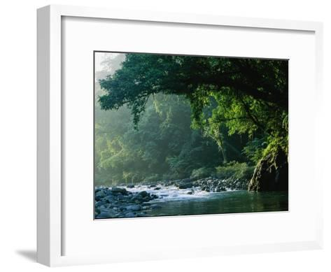 A River Flows Through a Northern Sierra Madre Natural Park Rainforest-Tim Laman-Framed Art Print