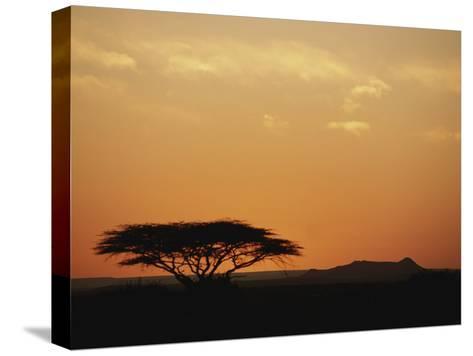 Twilight View of a Lone Tree on the Savanna-Kenneth Garrett-Stretched Canvas Print