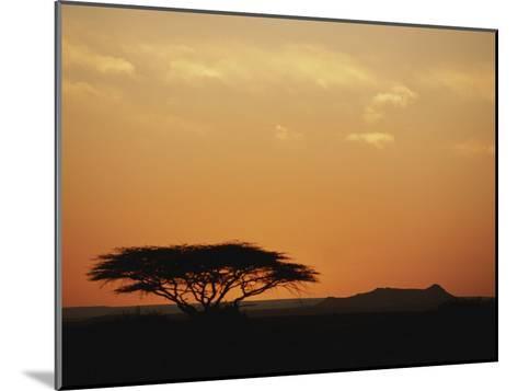 Twilight View of a Lone Tree on the Savanna-Kenneth Garrett-Mounted Photographic Print