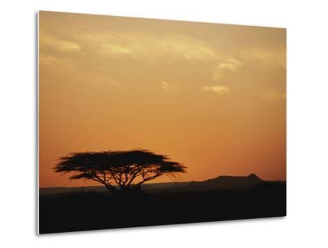 Twilight View of a Lone Tree on the Savanna-Kenneth Garrett-Metal Print
