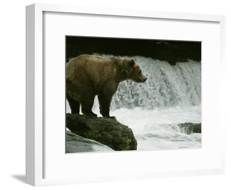 A Grizzly Bear Waits Patiently Near a Waterfall for Passing Fish-Tom Murphy-Framed Art Print