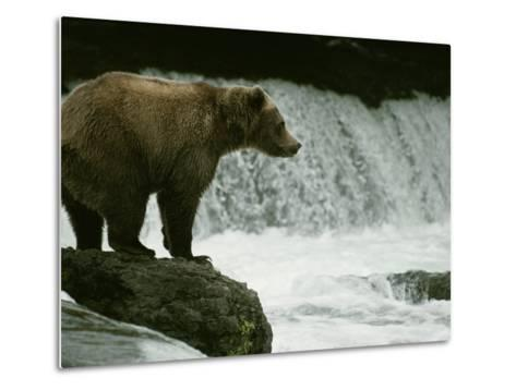 A Grizzly Bear Waits Patiently Near a Waterfall for Passing Fish-Tom Murphy-Metal Print