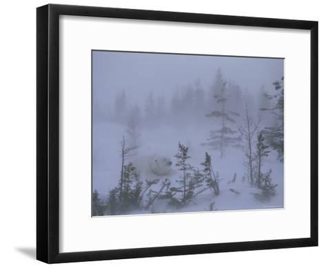 A Polar Bear Rests Amid Evergreen Trees in an Autumn Blizzard-Norbert Rosing-Framed Art Print