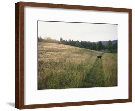A Dog Waits for its Master in a Swath of Freshly Mown Field at Sunset-Bill Curtsinger-Framed Art Print