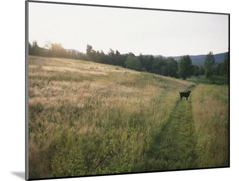 A Dog Waits for its Master in a Swath of Freshly Mown Field at Sunset-Bill Curtsinger-Mounted Photographic Print