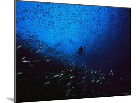 A Diver Swimming Amid a Huge School of Small Fish-Heather Perry-Mounted Photographic Print