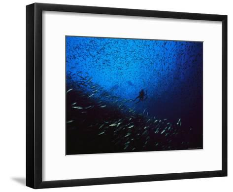 A Diver Swimming Amid a Huge School of Small Fish-Heather Perry-Framed Art Print