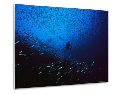A Diver Swimming Amid a Huge School of Small Fish-Heather Perry-Metal Print