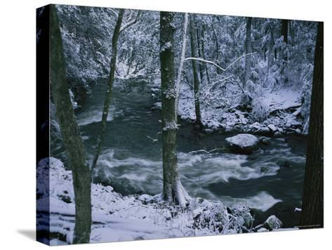 A Creek Rushes by in a Snow-Covered Forest-Stephen Alvarez-Stretched Canvas Print