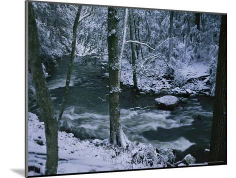 A Creek Rushes by in a Snow-Covered Forest-Stephen Alvarez-Mounted Photographic Print