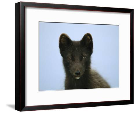 Portrait of an Arctic Fox in its Summer Coat-Joel Sartore-Framed Art Print