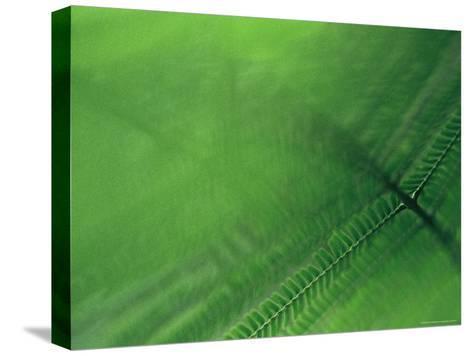 Leaf Patterns-Mattias Klum-Stretched Canvas Print